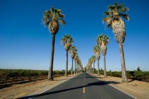 Raymond Morin Killed in DUI Collision on Dillon Road [Desert Hot Springs, CA]