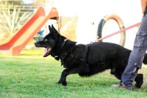 Police Officer Dog Killed in Car Crash in Sutro Street Area [Reno, NV]
