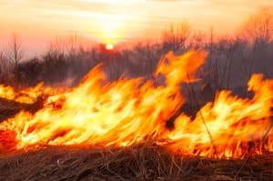 Jose Calderon Killed in Fiery Crash on Santa Fe Road [Escalon, CA]