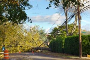 2 Injured in Tree Truck rollover Crash in Grove Street [Sonoma, CA]