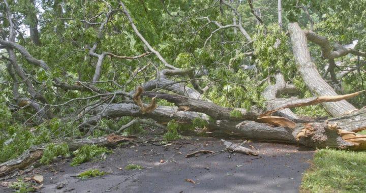Vehicle Crashes Into Tree Near Carlotta Fire Department [Carlotta, CA]